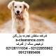 ترخیص سگ از گمرک