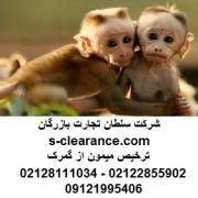 ترخیص میمون از گمرک