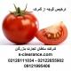 ترخیص گوجه از گمرک