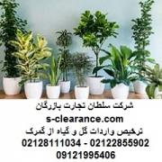 ترخیص واردات گل و گیاه از گمرک