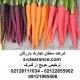ترخیص هویج از گمرک