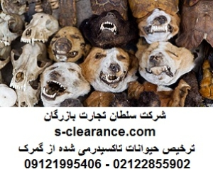 ترخیص حیوانات تاکسیدرمی شده از گمرک